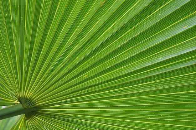 Grünes palmblatt