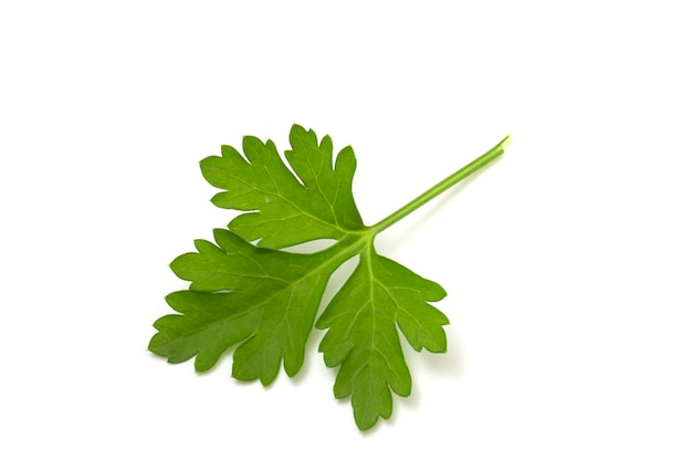 Grünes petersilienblatt isoliert auf weißem hintergrund.