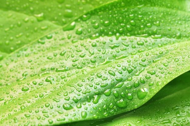 Grünes pflanzenblatt mit wassertropfen
