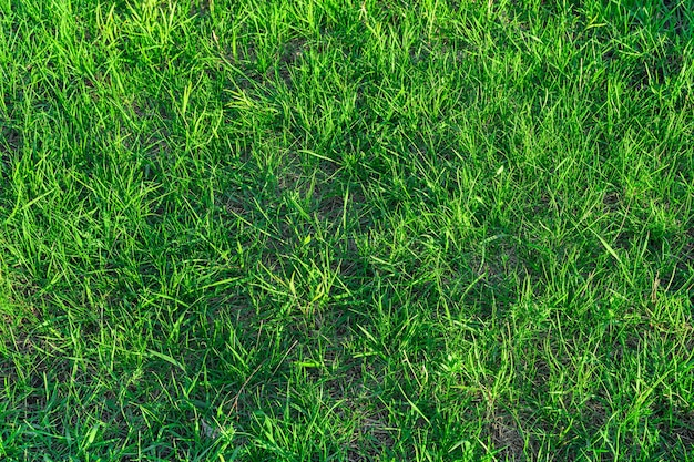 Grünes, saftiges gras im sonnenlicht. natürlicher hintergrund. seitenansicht.