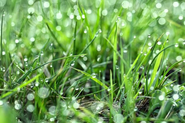 Grünes saftiges gras mit tau