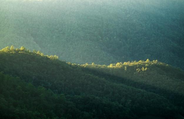Grünes sonnenlicht in den bergen