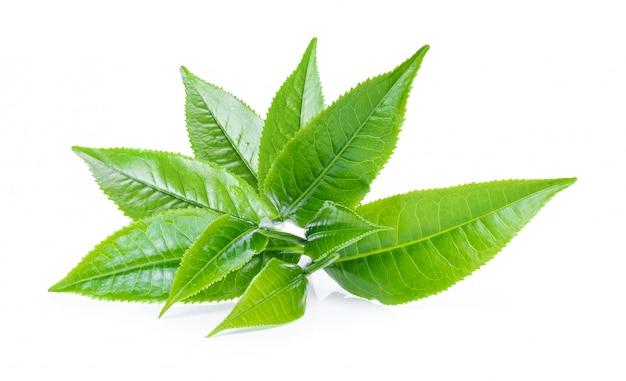 Grünes teeblatt auf weiß