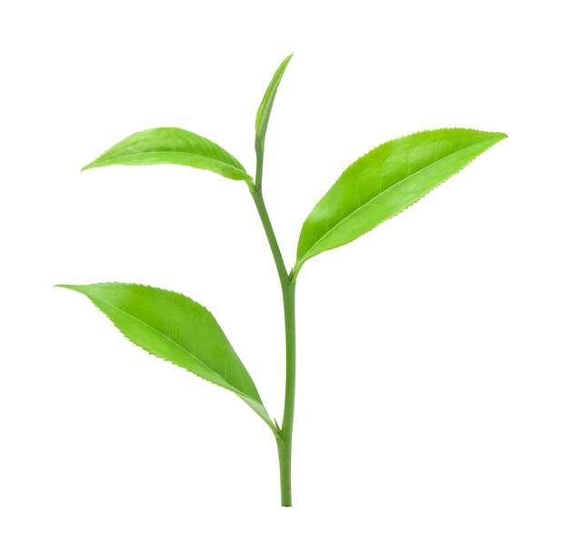 Grünes teeblatt lokalisiert auf weißem hintergrund.