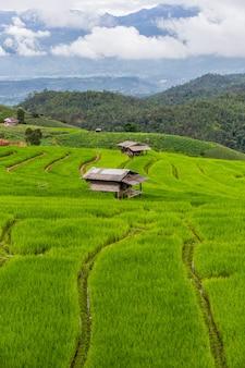 Grünes terassenförmig angelegtes reis-feld in pa pong pieng, mae chaem, chiang mai province, thailand