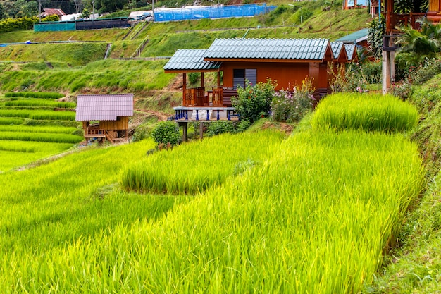 Grünes terassenförmig angelegtes reisfeld in mae klang luang, mae chaem, chiang mai, thailand