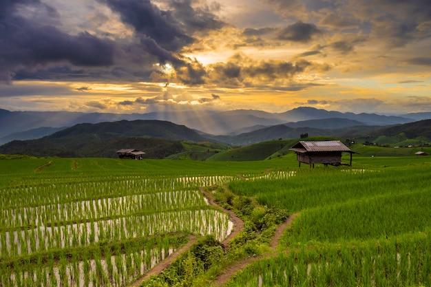 Grünes terrassiertes reisfeld in pa pong pieng, mae chaem, chiang mai, thailand