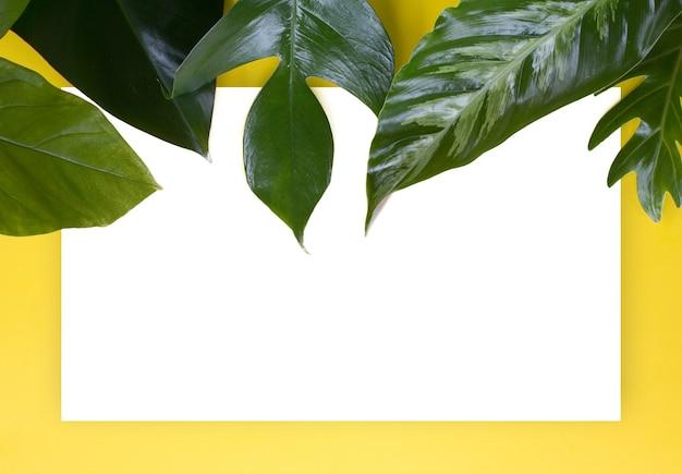 Grünes tropisches blatt auf gelbem hintergrunddesign für eco hintergrund oder dschungeltapetenhintergrund