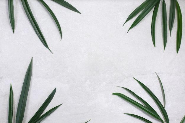 Grünes tropisches blatt auf grauem steinhintergrund