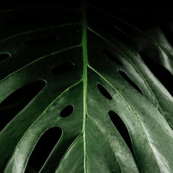 Grünes tropisches blatt der nahaufnahme
