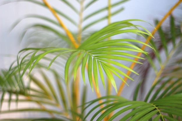 Grünes tropisches palmblatt mit schatten auf weißer wand