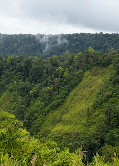Grünes üppiges tal und berg in costa rica