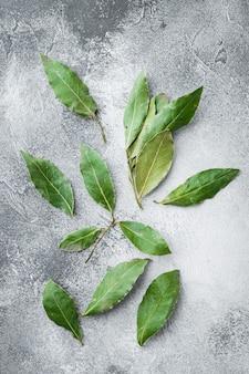 Grünes und frisches lorbeer-lorbeerblatt-set auf grau