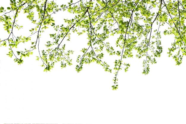 Grünes urlaubsisolat auf weißem hintergrund