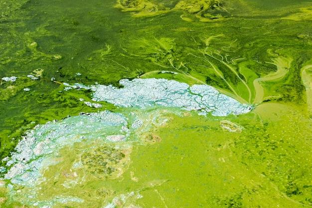Grünes wasser mit schlamm