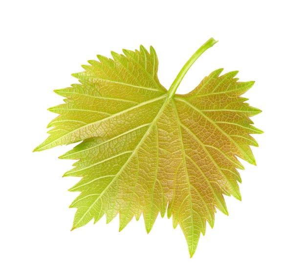 Grünes weinblatt isoliert auf weißem hintergrund. beschneidungspfad.