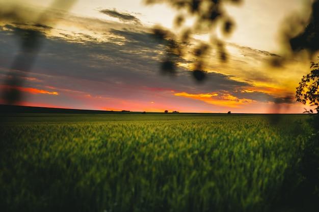 Grünes weizenfeld am sonnenuntergang