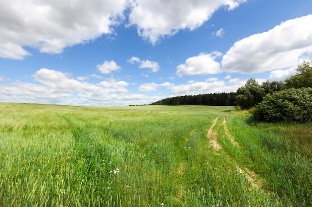 Grünes weizenfeld, an dessen rand die spurrillen vom verkehr abgehen