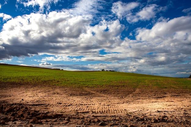 Grünes weizenfeld mit blauem himmel und weißen wolken