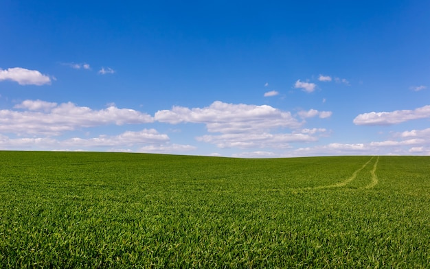 Grünes weizenfeld mit blauem himmel und wolken