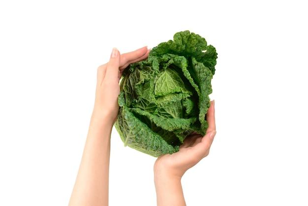 Grünkohl isoliert auf weißer oberfläche. in frauenhänden.