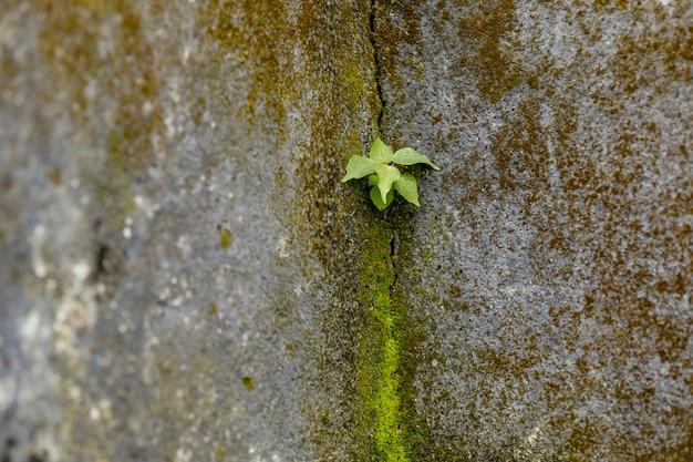 Grünpflanze auf hausmauerverbindung