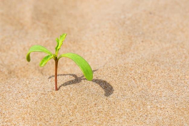 Grünpflanze, die im sand wächst. konzept der motivation und willenskraft