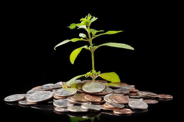 Grünpflanze, die von den münzen auf schwarzem wächst