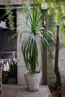 Grünpflanze im hinterhof