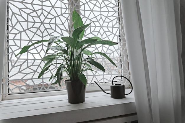 Grünpflanze im topf und in der gießkanne auf weißem fensterbrett.