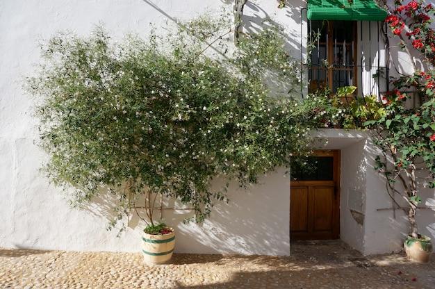 Grünpflanze mit weißen blumen im topf