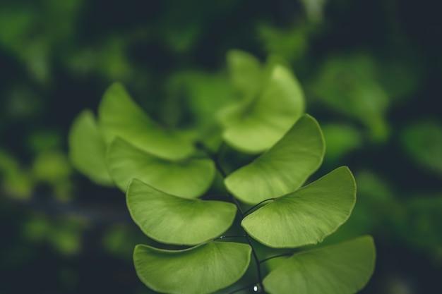 Grünpflanze weichen fokus