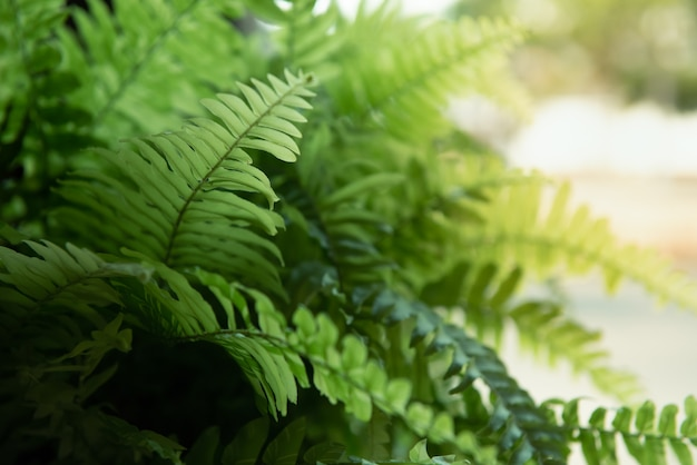 Grünpflanzehintergrund mit sonnenlicht.
