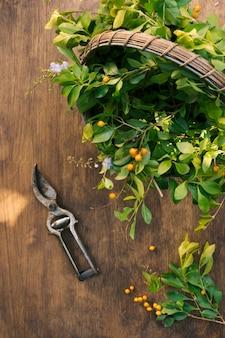 Grünpflanzezweige im korb in der nähe von gartenschere