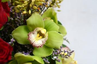 Grüne Cymbidiumblume auf weißem Hintergrund