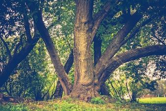 Grüne gekrümmte Bäume im Park Retro