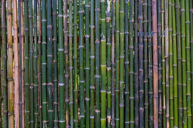 Grunge grüner bambuszaun, beschaffenheitshintergrund.