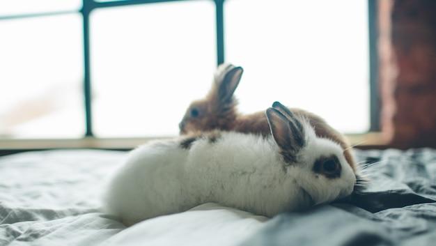 Gruppe der schönheit niedliches süßes kleines osterhasen-kaninchenbaby in den verschiedenen farben schwarzbraun und weiß im raum auf dem bett
