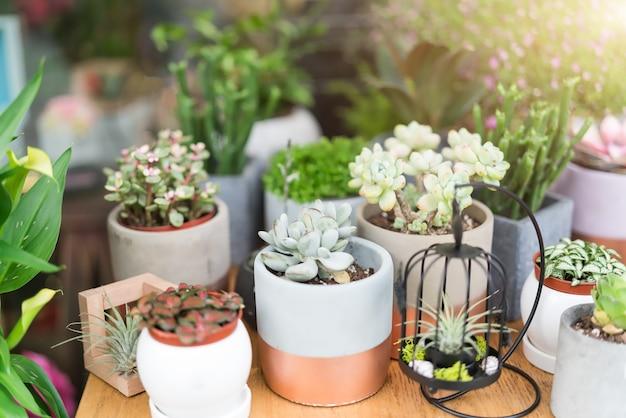 Gruppe des kaktus im topf auf holztischhintergründen. frühlingsblumen-konzept