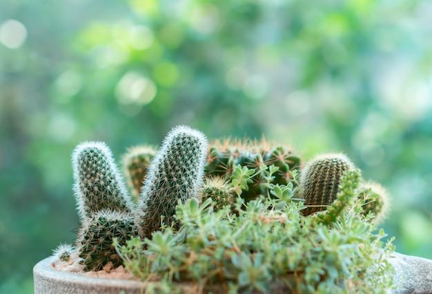 Gruppe des kleinen kaktus im gartenbehälter-blumentopf mit grünem baum bokeh hintergrund