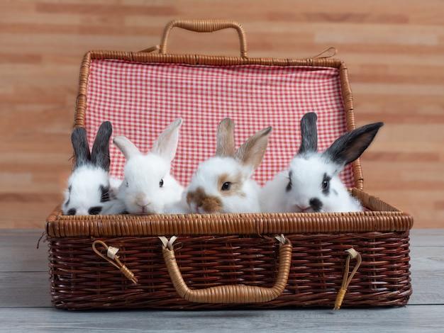 Gruppe des netten babykaninchens in der korbtasche auf hölzerner tabelle