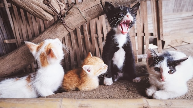 Gruppe kätzchen, die im landhaus spielen - nettes kleines katzenmehrfarbenlügen auf boden