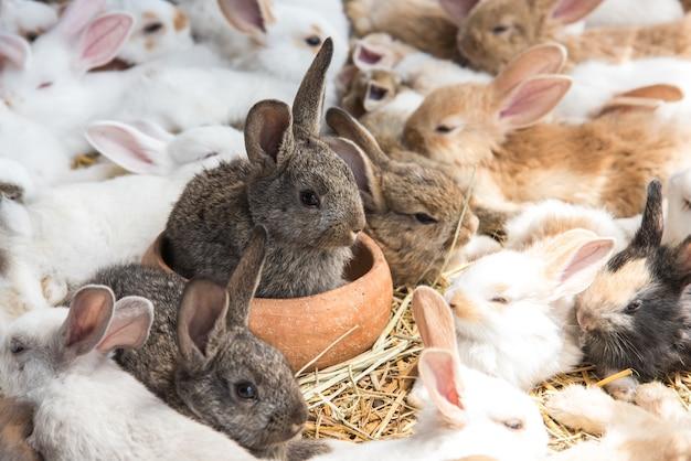 Gruppe kaninchen, die im geschäft für haustiere stillstehen und auf käufer warten. tier- und reizendes haustierkonzept