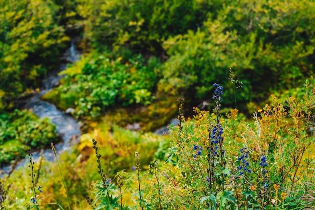 Gruppe schöne blühende purpurrote blumen des rittersporns nahe gebirgsbachnahaufnahme.