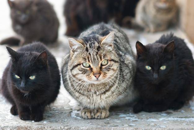 Gruppe sitzender katzen