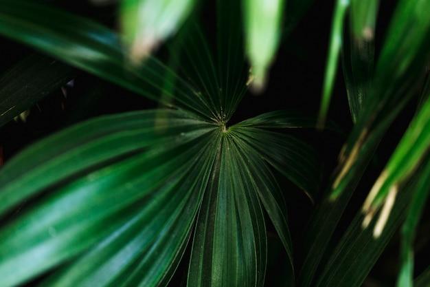 Gruppe tropische grünblätter