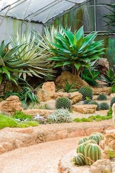 Gruppe vieler kaktusspezies auf dem kies, der im gewächshaus wächst