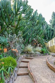 Gruppe vieler kaktusspezies im garten
