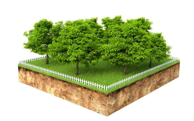 Gruppe von bäumen auf einem stück land