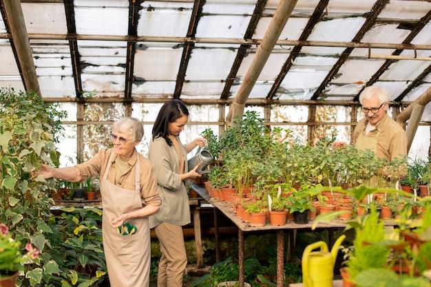 Gruppe von gewächshausarbeitern, die für die tägliche pflege von pflanzen verantwortlich sind, die pflanzen gießen und blätter kontrollieren